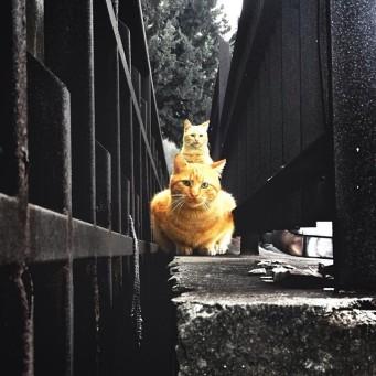 Cats piramid iphone 4S - 2013